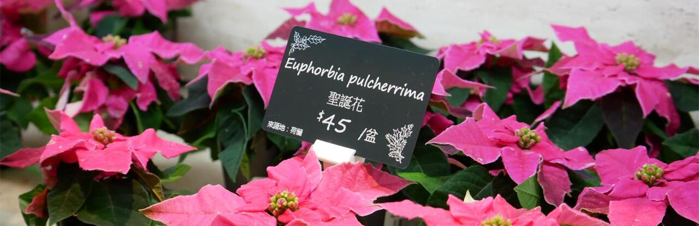 Price tags for Brighten Floriculture flower shop – Edikio testimonial